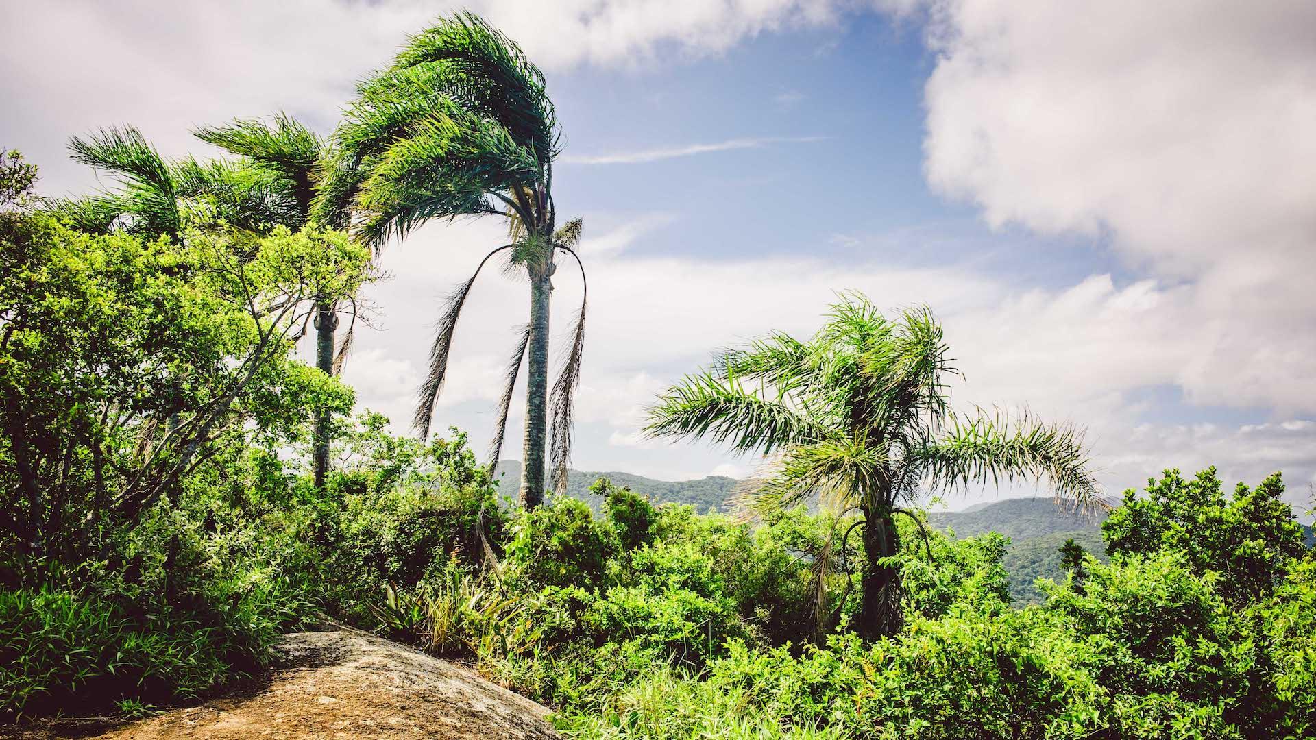 Atlantischer Regenwald in Florianopolis